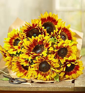 1800flowers-stunning-mahogany-flowers